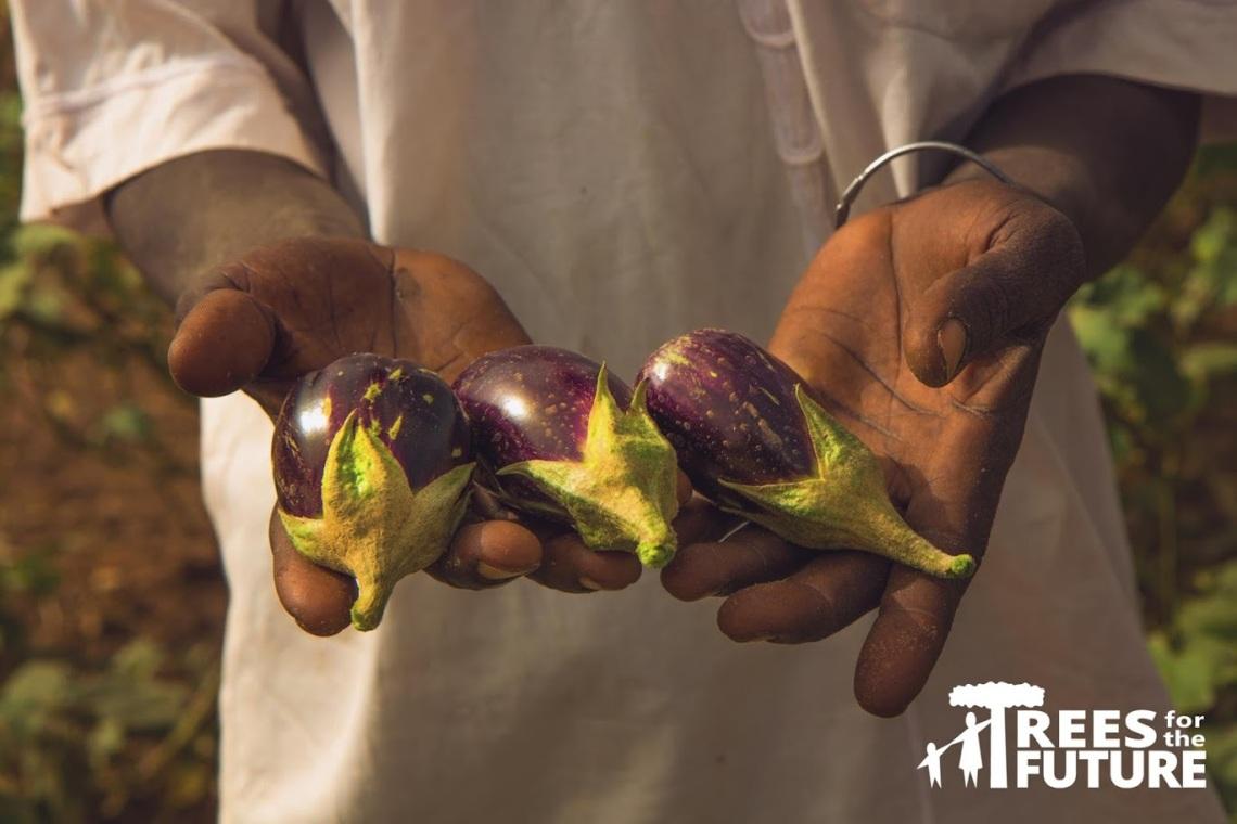 hand-holding-eggplant